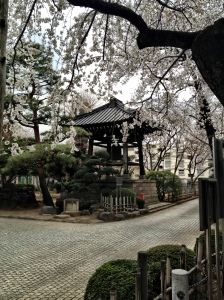 Sakura's at Gotokuji temple