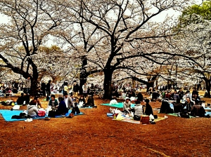 Hanami at Yoyogi koen