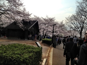 The crowds enjoying Sakura at Yoyogi koen