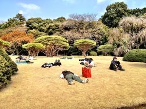 People enjoying the first rays of spring sun at Shinjuku gyoen park