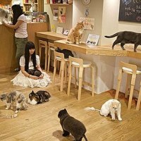 Tokyo's cat cafe's, a world on its own