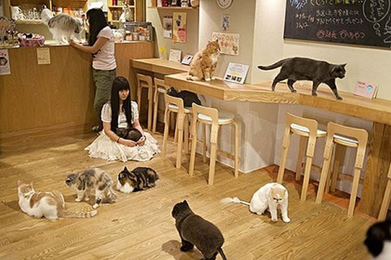 Cat cafe's tend to attract somewhat 'odd' people. (mostly girls)