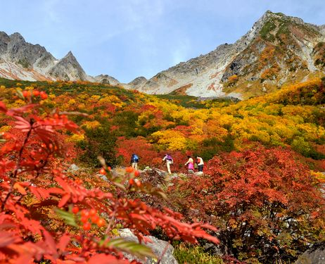 limbers make their way through forests tinged with autumnal colors in Karasawa Cirque in the Northern Japan Alps.